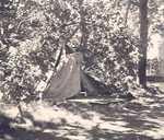 Tree blown down on tent