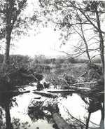 Brook near Hannibal, N.Y