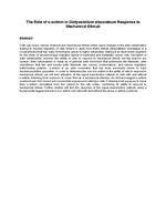 The Role of α-actinin in Dictyostelium discoideum Response to Mechanical Stimuli
